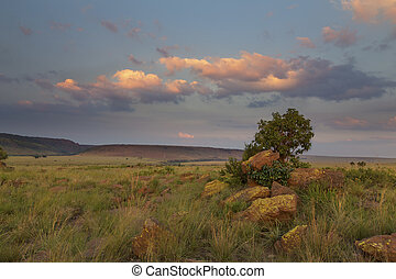 Landscape of tree on a hill with rocks and clouds at sunset