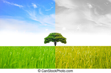 Landscape of Trees With the changing environment.