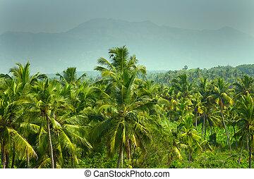 landscape of tropical world.