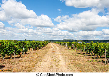 landscape of vineyards in the Loire Valley France