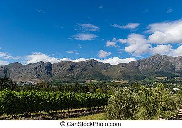 Franschhoek - Landscape of Winelands South Africa,...