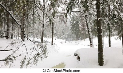 Landscape of winter forest - Landscape of wild winter forest...