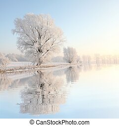 Frosty winter tree illuminated by the rising sun on the lake shore