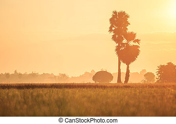 Landscape of young green rice field at morning time in Thailand