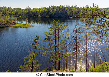 landscape on a forest lake