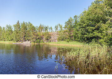 forest lake in a sunny summer day