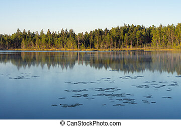 forest lake with reflections