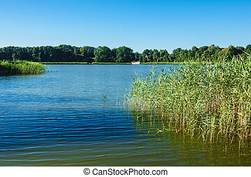 Landscape on a lake with trees and reeds