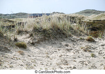 Landscape on Amrum, Germany - Amrum is one of the North...