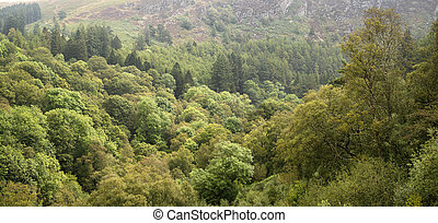 Landscape panorama image of lush green forest in Summer with mou
