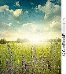 landscape - Green meadow under blue sky with cloud