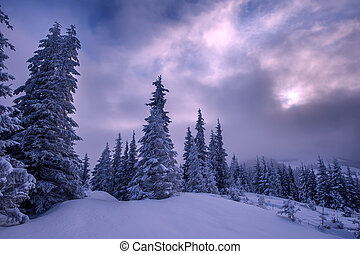 landscape - Fantastic winter landscape with snowy trees....
