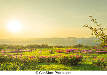 Landscape pink flowers on summer mountain and sun