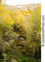landscape ravine with creek autumn yellow trees foliage and...