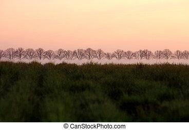 Landscape - Row of Trees in a field