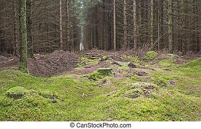 Landscape scene through rural woodland forest in winter