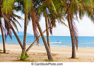 landscape sea palm beach