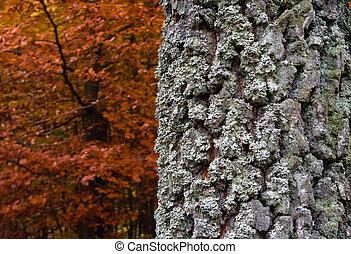 autumn landscape with trunk