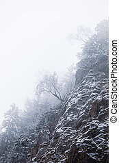 Landscape shot of mountains and forests in winter time