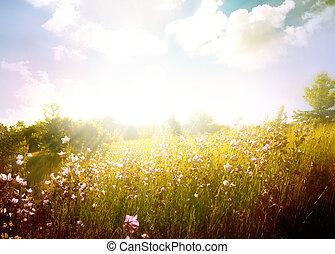 landscape - Spring flower field and blue sky.