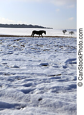 Landscape - Horse in winter landscape