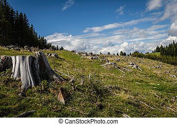 Landscape - Clearcut forest and uncut forest in...
