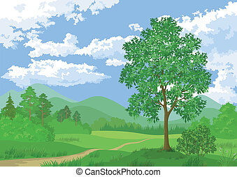 Landscape, summer forest and maple tree
