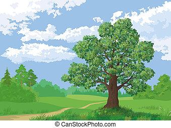 Landscape, summer forest and oak tree