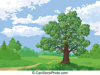 Landscape, summer forest and oak tree - Landscape: summer...