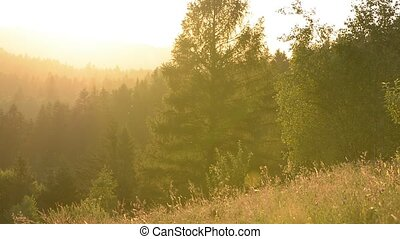 Landscape, sunset in a mountain forest in the meadow. Trees...