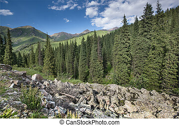 landscape tree aspen groves in rocky mountains