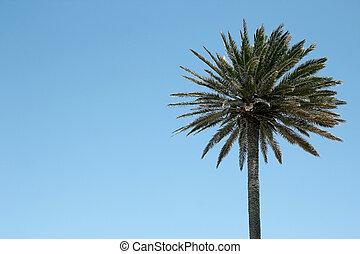 Landscape tree on the sea resort