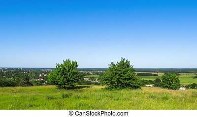 Landscape, trees high on top against a plain background.