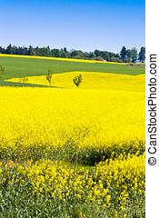 landscape, tsjech, lente, -, gele, boheems, republiek, akker, paradijs, landbouw, aanranding
