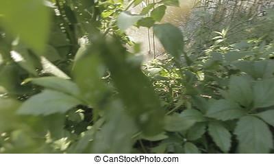 Landscape Vegetation to Pond Pan Shot - Landscape vegetation...