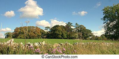 landscape view across a field