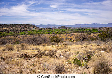 Landscape view from Montezuma Well,