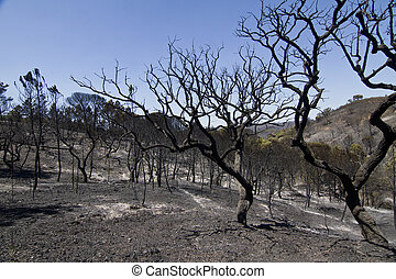 burned forest - Landscape view of a burned forest, victim of...