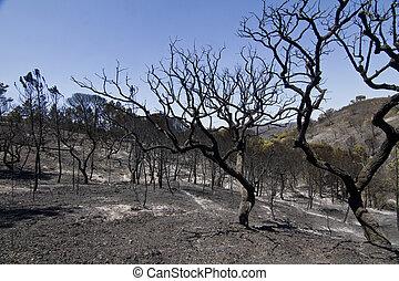 burned forest - Landscape view of a burned forest, victim of...