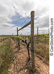 Landscape view of a vineyard