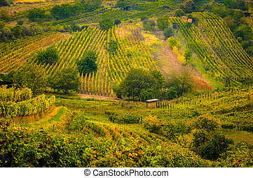 Landscape view of beautiful vintage vineyards and hills with colorful foliage