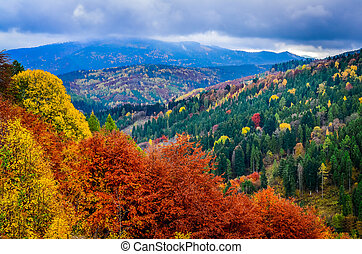 Landscape view of colorful autumn foliage forrest at cloudy day, Slovakia