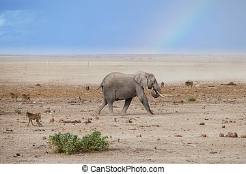 Landscape view of elephant grazing and monkeys in the wilderness