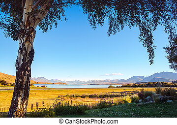 Landscape view of Lake Tekapo framed with a tree at sunrise