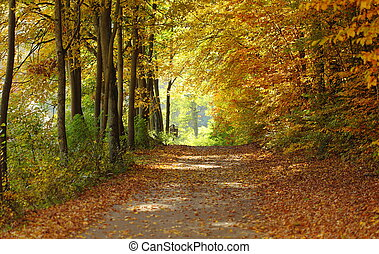Landscape, view of path in autumnal park