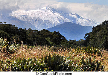 Landscape View of South Island, New Zealand