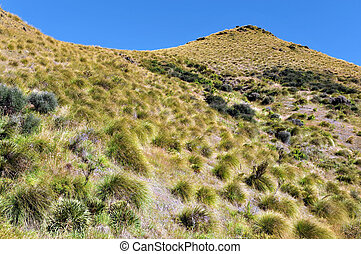 Landscape View of South Island, New Zealand - Landscape view...