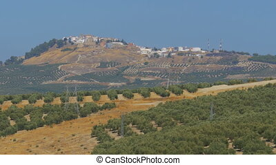 Landscape view of the Olive Fields in the Desert of Spain