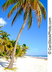 Landscape view of tranquil beach with palm trees, Tulum