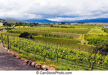 Landscape view of vineyards in California Napa Valley wine...